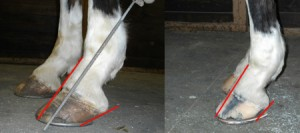 hoof to pastern angles before and after